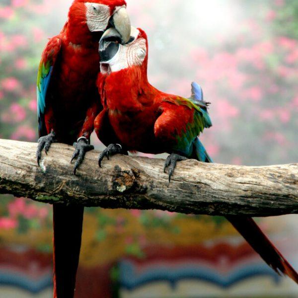 4 października – Światowy Dzień Zwierząt