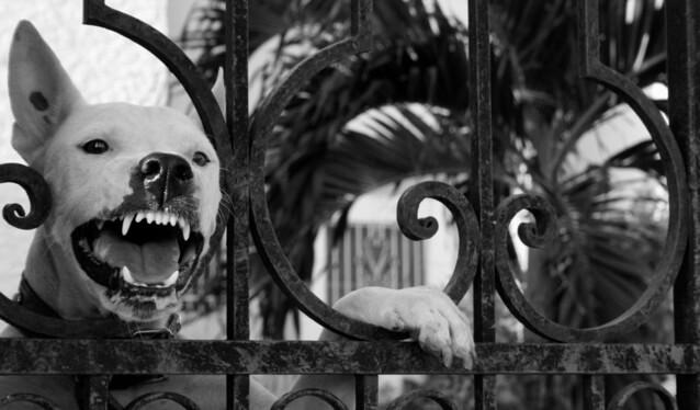 Szczepienie zwierząt – wścieklizna